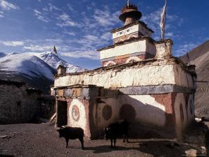 Stupa With Yaks at Dolpo, Nepal by Vassi Koutsaftis