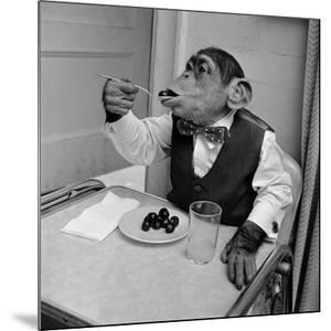 Cherry Chimp by Vecchio
