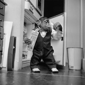 Thirsty Monkey by Vecchio