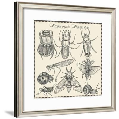 Vector Set Insects in Vintage Style- HorG-Framed Premium Giclee Print