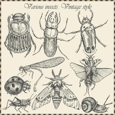 Vector Set Insects in Vintage Style- HorG-Art Print