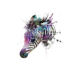 Zebra by VeeBee