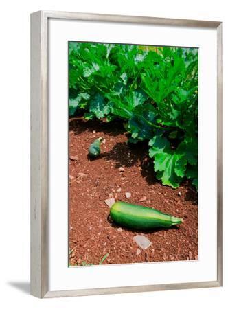 Vegetable garden at Thomas Jefferson's Monticello in Charlottesville Virginia--Framed Photographic Print