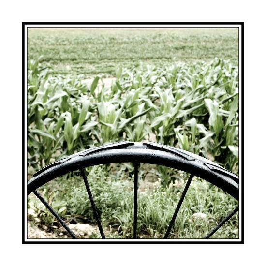 Vegetable Garden-Harold Silverman-Giclee Print
