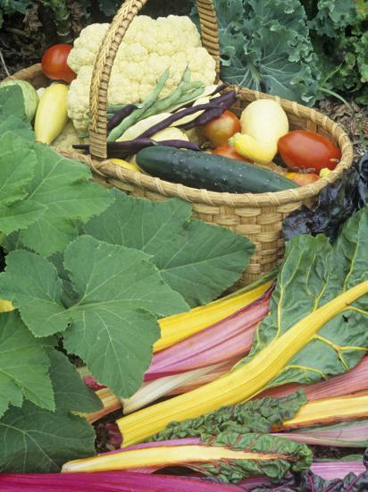 Vegetable Harvest-David Cavagnaro-Photographic Print