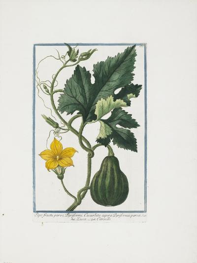 Vegetable Print, from Hortus Romanus, Vol. I or II?, 1772-1793-Giorgio Bonelli-Giclee Print