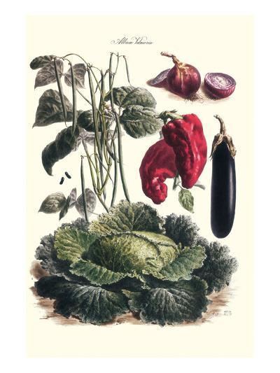Vegetables; Eggplant, Cabbage, Peppers, Onions, and Beans.-Philippe-Victoire Leveque de Vilmorin-Art Print