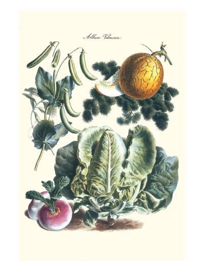 Vegetables; Melon, Lettuce, Green Beans, and Turnips-Philippe-Victoire Leveque de Vilmorin-Art Print