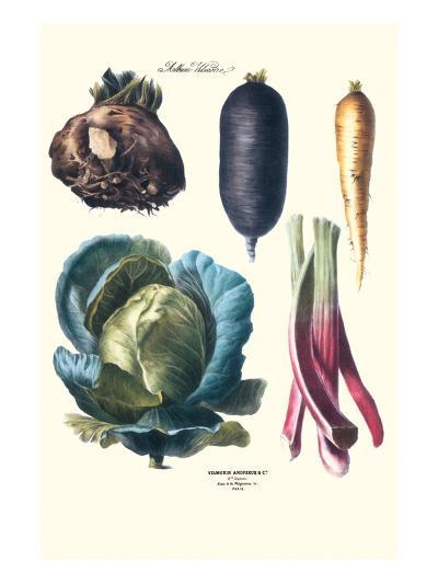 Vegetables; Rhubard, Tubers, and Cabbage-Philippe-Victoire Leveque de Vilmorin-Art Print