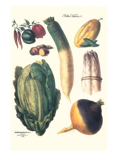Vegetables; White Asparagus, Spago, Peppers, Cabbage, Turnip-Philippe-Victoire Leveque de Vilmorin-Art Print