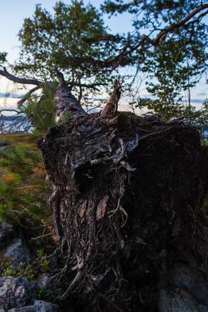 https://imgc.artprintimages.com/img/print/vegetation-fallen-tree-shore-stora-le-lake-sweden_u-l-q1exubr0.jpg?p=0