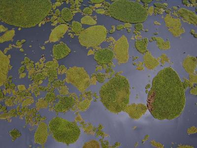 Vegetation Floating on Lake Wamala and Reflections of a Cloudy Sky-Michael Polzia-Photographic Print