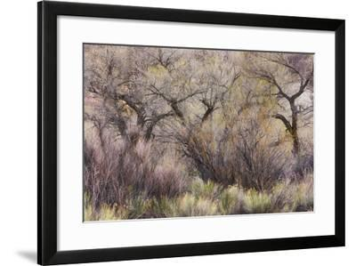 Vegetation in the Fremont River Valley, Capitol Reef National Park, Utah, Usa-Rainer Mirau-Framed Photographic Print