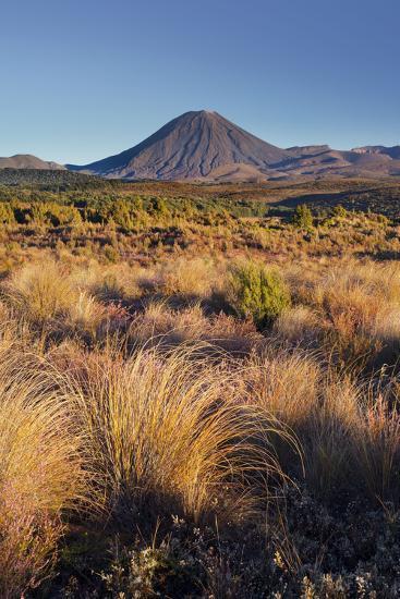 Vegetation, Mount Ngauruhoe, Tongariro National Park, Manawatu-Manganui, North Island, New Zealand-Rainer Mirau-Photographic Print