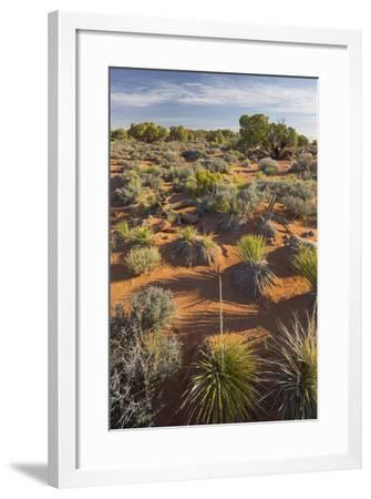 Vegetation Near the Grand View Point, Island in the Sky, Canyonlands National Park, Utah, Usa-Rainer Mirau-Framed Photographic Print