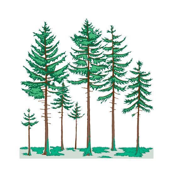 Vegetation Profile of a Boreal Forest. Biosphere, Earth Sciences-Encyclopaedia Britannica-Art Print