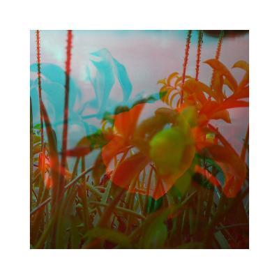 Vegetaux 19, 2012-Nicolas Le Beuan B?nic-Premium Giclee Print