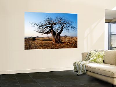 Vehicle Track Beside Baobab Tree, Singida-Mark Daffey-Wall Mural