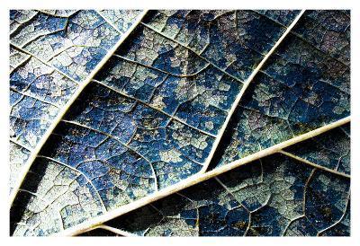 Veined leaf II-Jean-Fran?ois Dupuis-Art Print