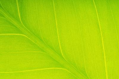 Veins in Leaf-DLILLC-Photographic Print
