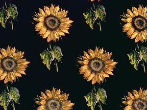 Velours au Sabre: Silk decoration of Sunflowers by Maison Ogier and Duplan, Lyon 1894