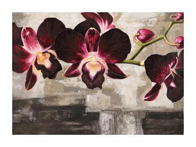 Velvet Orchids-Shin Mills-Art Print