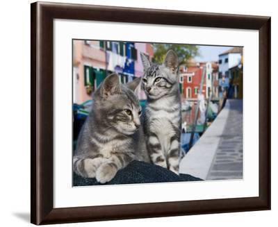 Venetian Cats Alongside Fond Die Terranova Canal-Holger Leue-Framed Photographic Print