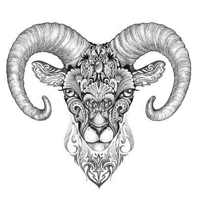 Mountain Sheep, Argali, Black and White Ink Drawing