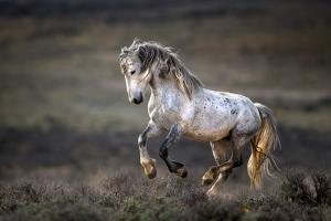 Wild Wild West by Verdon