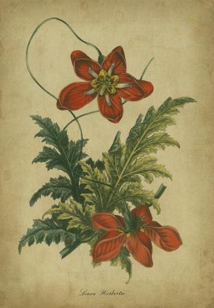 https://imgc.artprintimages.com/img/print/vermilion-blooms-iii_u-l-f5bwx50.jpg?p=0