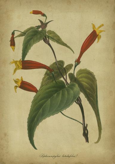 Vermilion Blooms IV-Paxton-Art Print