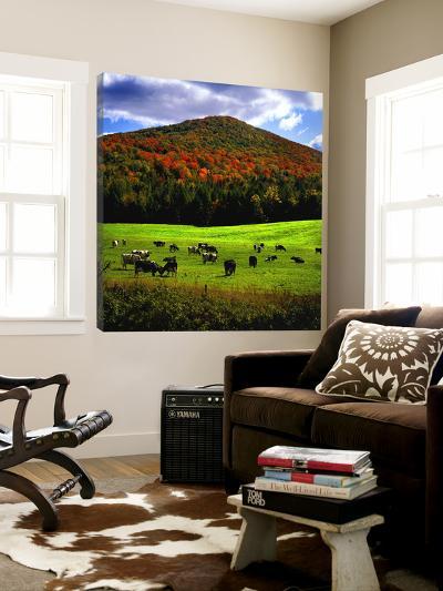Vermont Cows-Jody Miller-Loft Art