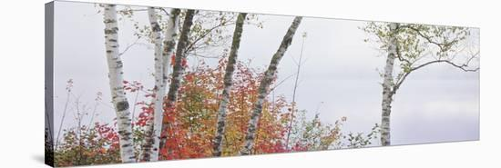 Vermont Groton Lake 3-Danny Burk-Stretched Canvas Print