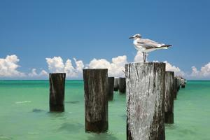 Welcome to Naples, Florida by Verne Varona