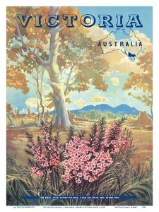 Victoria Australia - Pink Heath Flower - Floral Emblem of Victoria by Vernon Jones