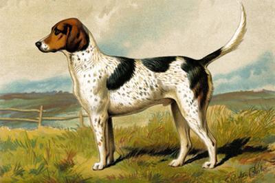 Foxhound by Vero Shaw