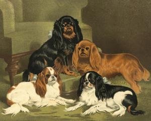 Toy Spaniels by Vero Shaw