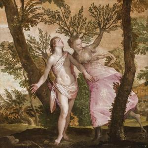 Apollo and Daphne, C.1560-65 by Veronese