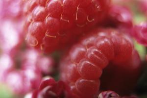 Raspberries by Veronique Leplat