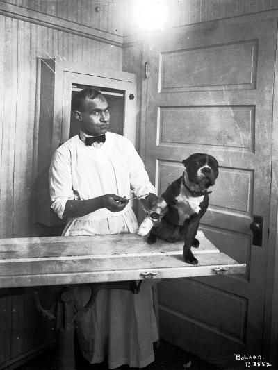 Veterinary Care of Dog, 1921-Marvin Boland-Giclee Print
