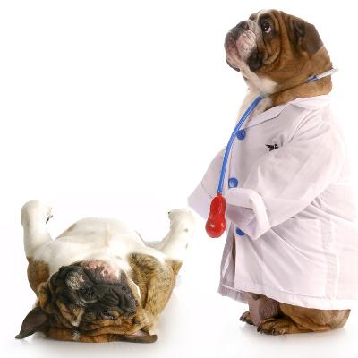 Veterinary Care-Willee Cole-Photographic Print