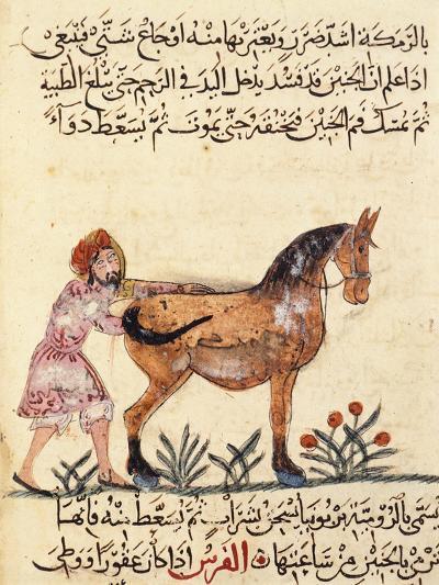 Veterinary Surgeon Helping a Horse to Foal, Miniature, Islamic Art, 13th Century--Giclee Print