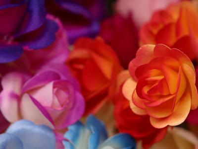 Vibrant and Colorful Arrangement of Beautiful Silk Roses--Photographic Print