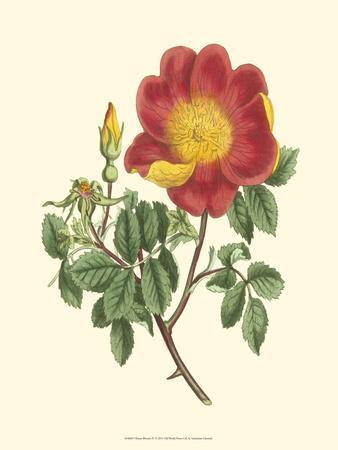 https://imgc.artprintimages.com/img/print/vibrant-blooms-iv_u-l-q11ach30.jpg?p=0