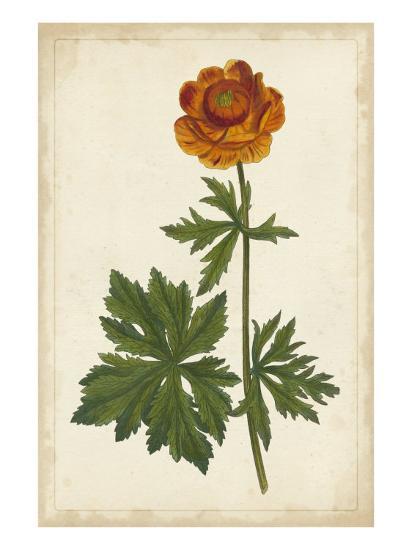 Vibrant Botanicals V--Art Print