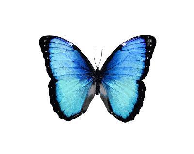 Vibrant Butterfly II-Julia Bosco-Giclee Print