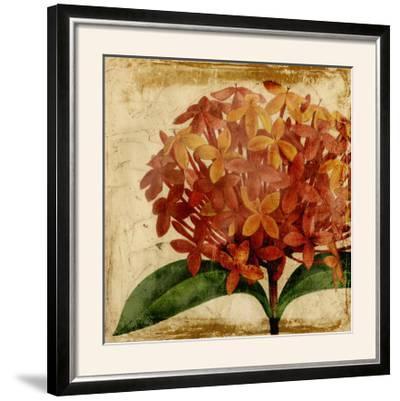 Vibrant Floral III-Vision Studio-Framed Photographic Print