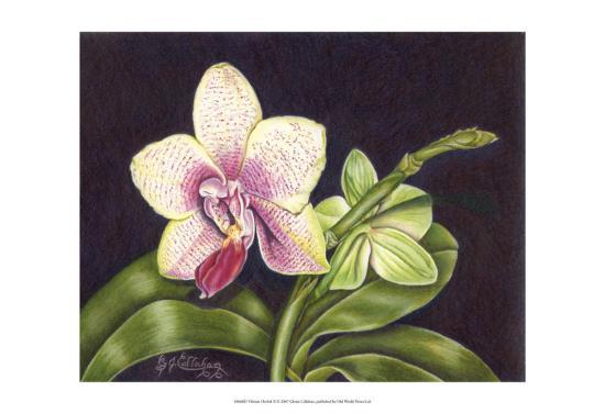 Vibrant Orchid II-Gloria J^ Callahan-Art Print
