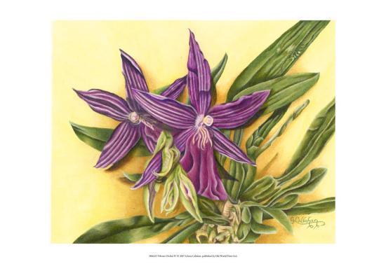 Vibrant Orchid IV-Gloria J^ Callahan-Art Print