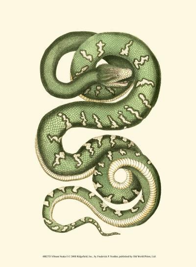 Vibrant Snake I-Frederick P^ Nodder-Art Print